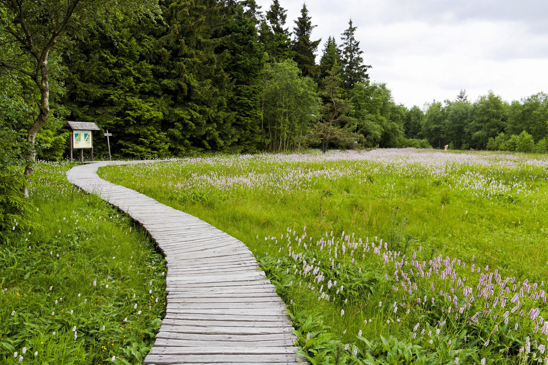 Foto des Holzstegs im Schwarzen Moor in der Rhön bei Bad Kissingen